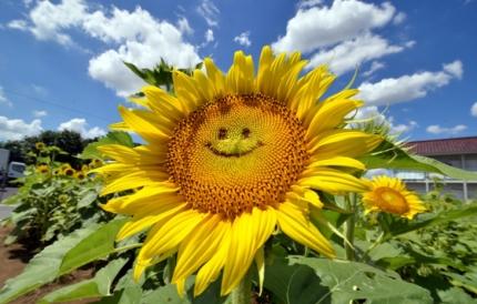 Le sourire de l'amour