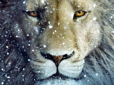 Nul lion ne désespère en hiver
