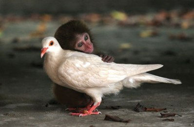 top-10-friendship-animals