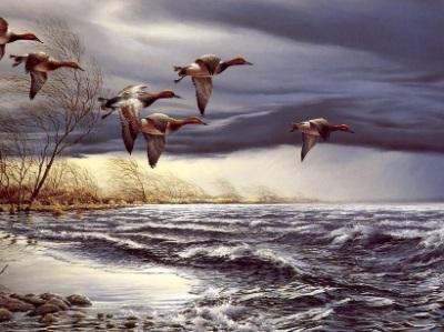 Canards au-dessus de l'eau