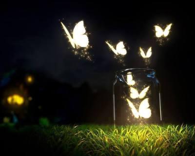 Papillons lumineux la nuit