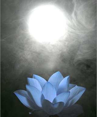 blue-lotus-flower