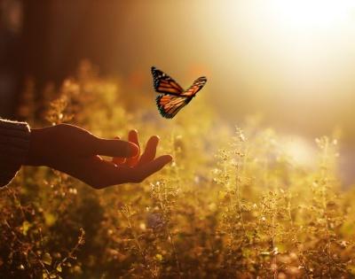 Papillon du pardon