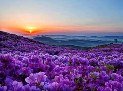 Soleil couchant champ lilas