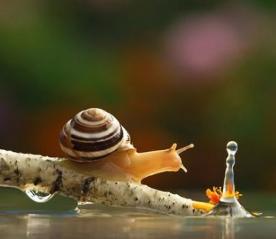 beautiful-world-snails-04