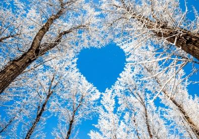 Coeur arbres