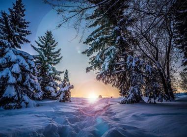 Sapins d'hiver soleil