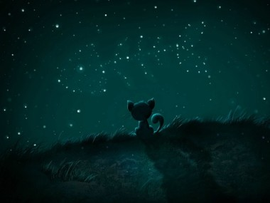 Chat étoiles poisson