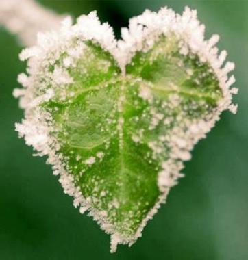 Coeur de givre