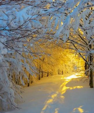 Sentier neige soleil