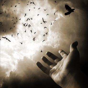 Flying_away_by_Falkone