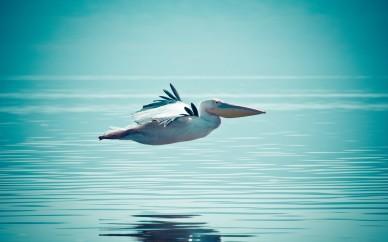 Oiseau libre eau
