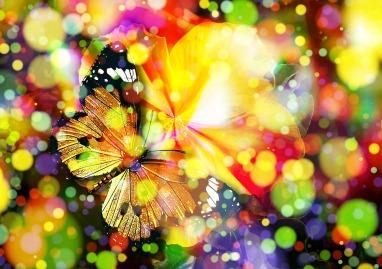 Papillon multicolore magie