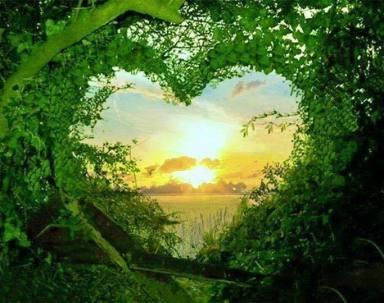 Soleil dans les feuilles coeur