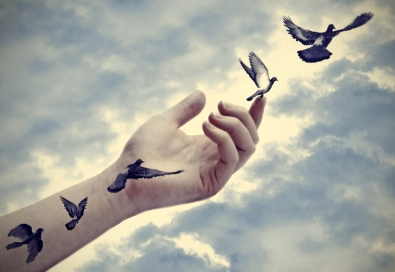 Mains ciel oiseau