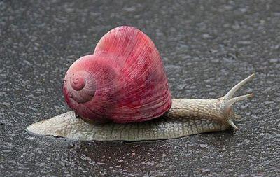 Coeur escargot