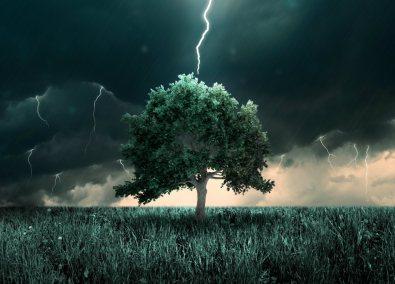 tree-lightning-ss-1920