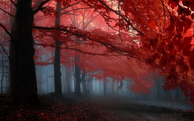 forest-trees-red-leaves-foggy-misty-peaceful-autumn-fall-landscape-1440x900