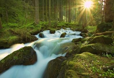 Soleil forêt source