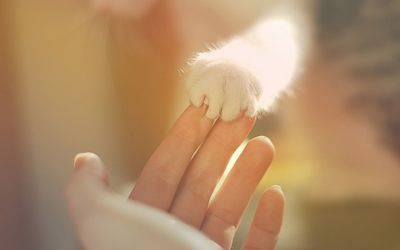 love_hand_white_fur_girl_woman_cat