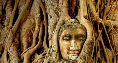 boudha-arbre-dore